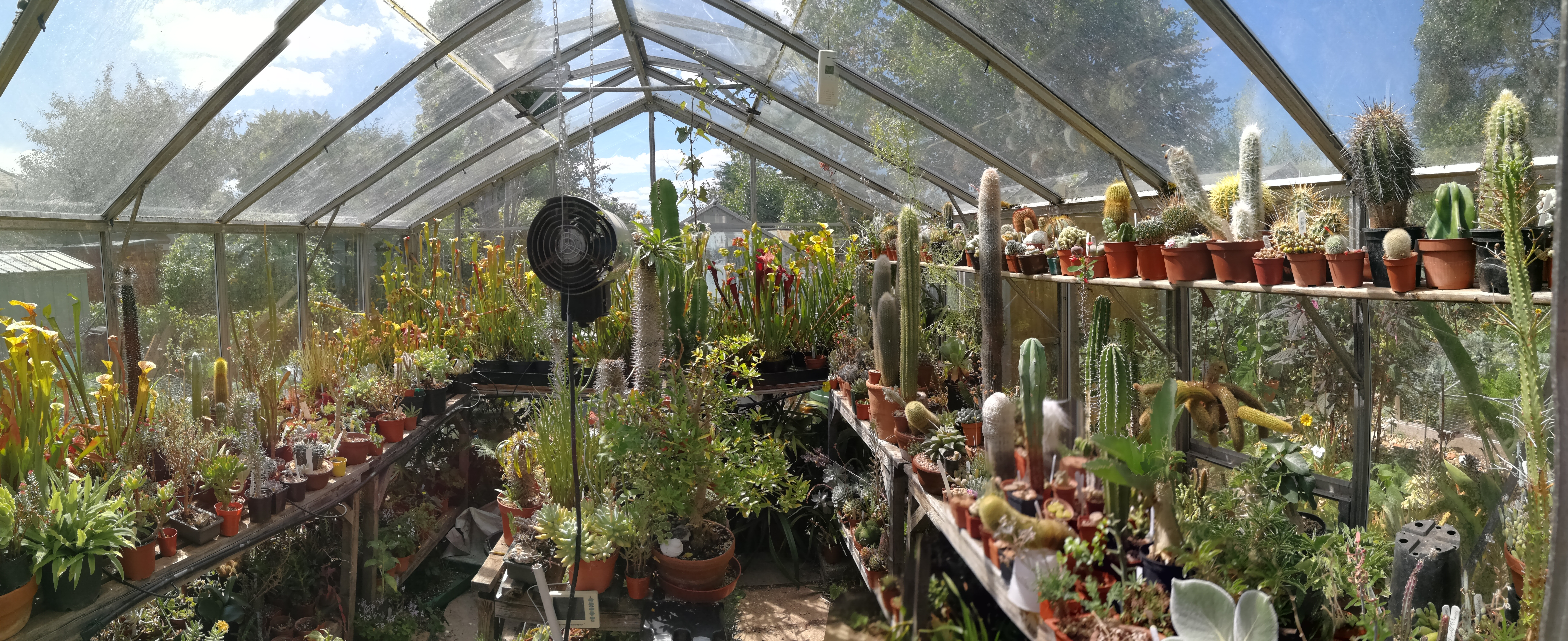 A panorama of my greenhouse